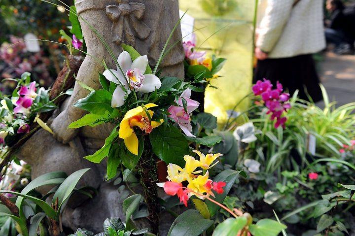 Dni Orchidei w Egzotarium